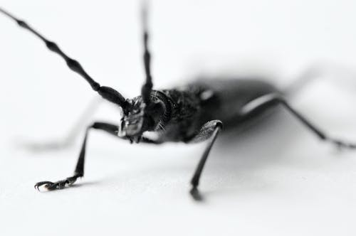 Black and White Photo of an Insect
