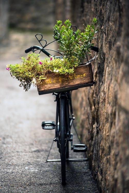 Foto stok gratis bunga, cahaya, daun
