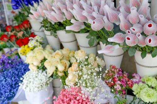 Foto profissional grátis de floricultura, rosas