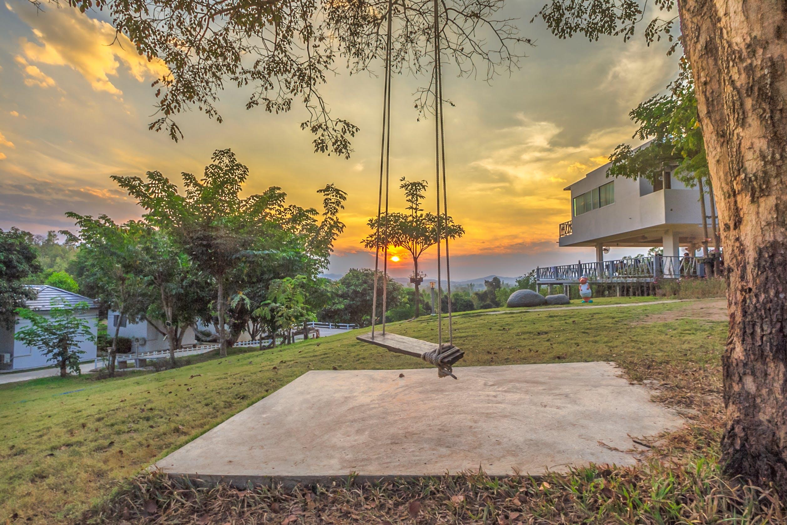 Gray Swing on Tree Photo during Sunest
