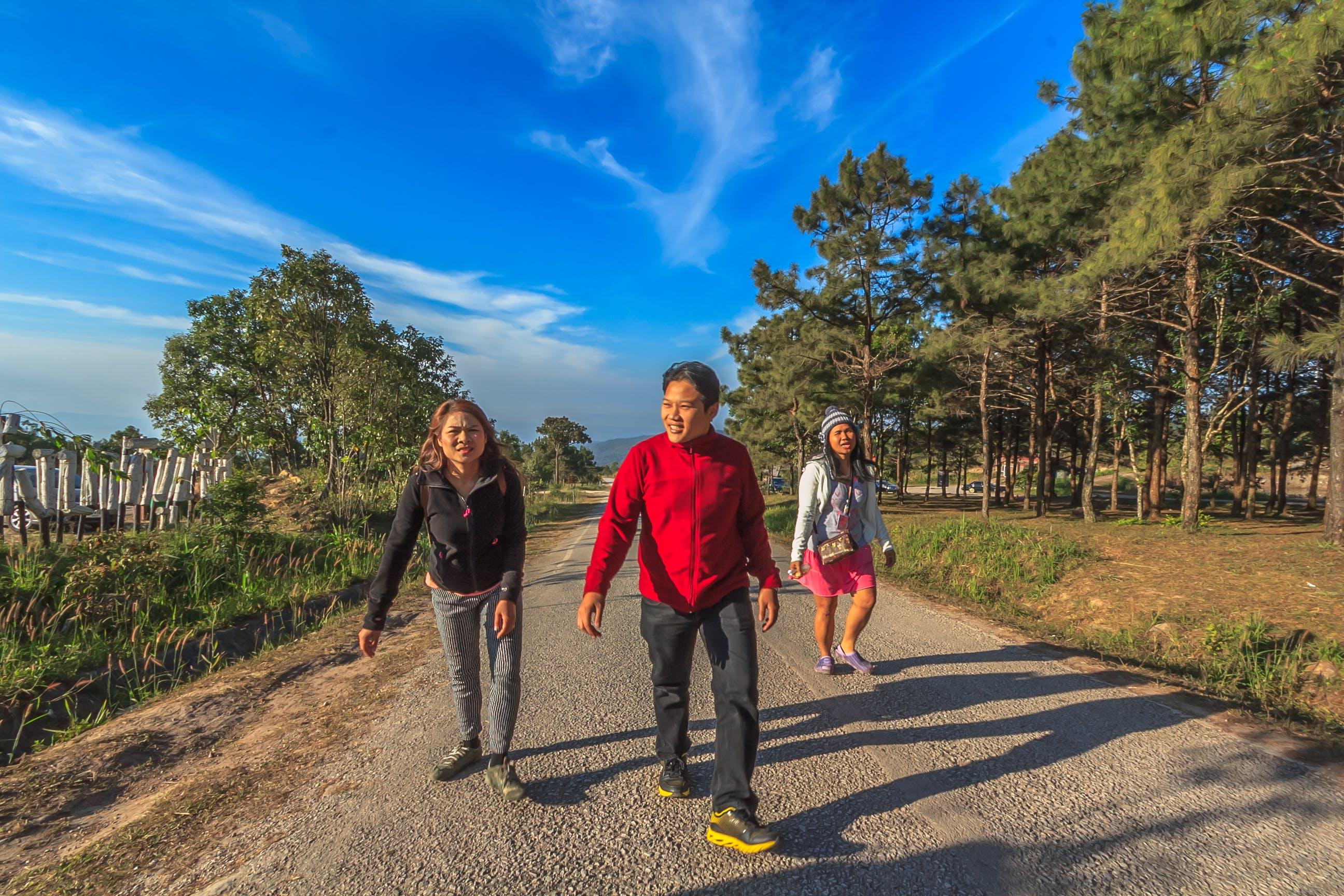 Foto d'estoc gratuïta de arbres, boscos, caminant, carretera