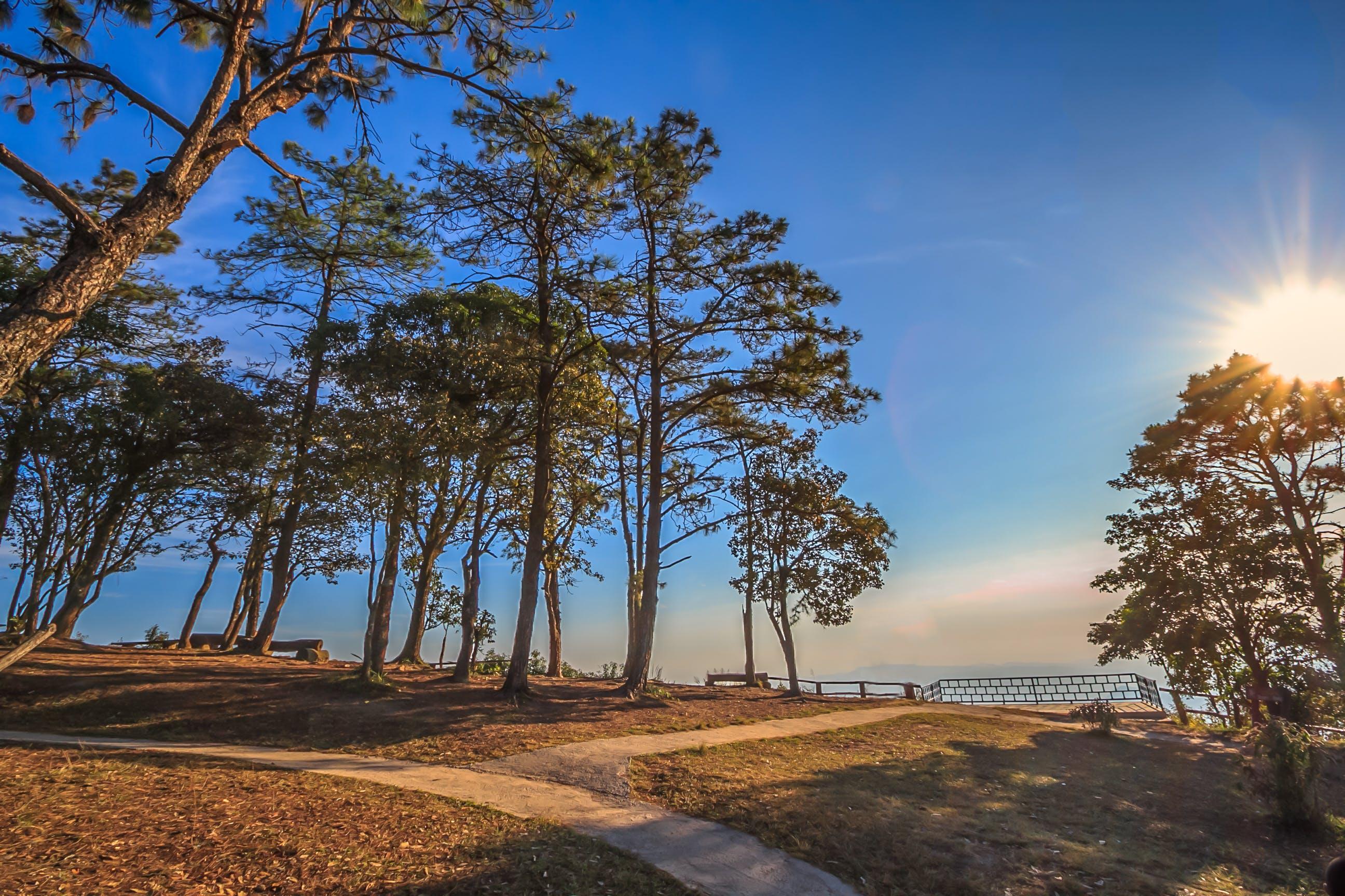 คลังภาพถ่ายฟรี ของ กลางวัน, ดวงอาทิตย์, ตะวันลับฟ้า, ต้นไม้