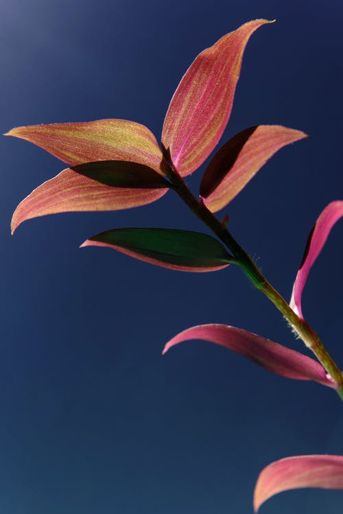 Gratis stockfoto met bladeren, blauwe lucht, detailopname