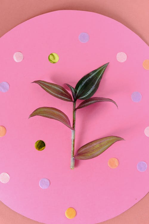 Close-Up Shot of a Plant on Pink Surface