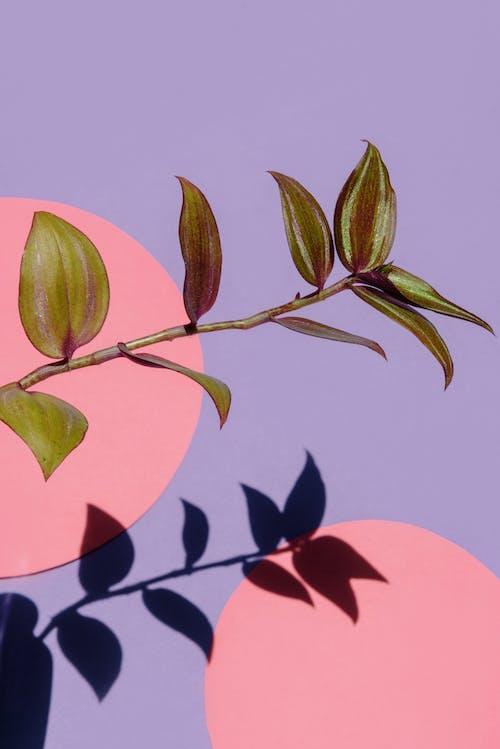 Close-Up Shot of a Plant