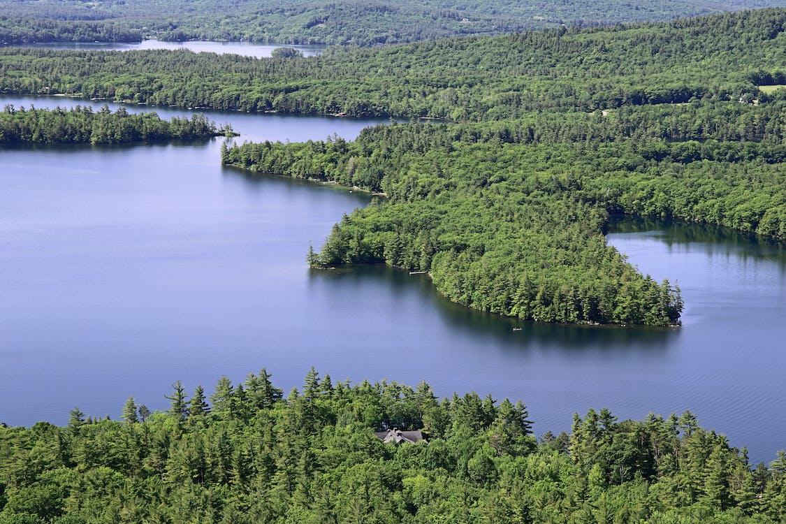água, árvores, floresta