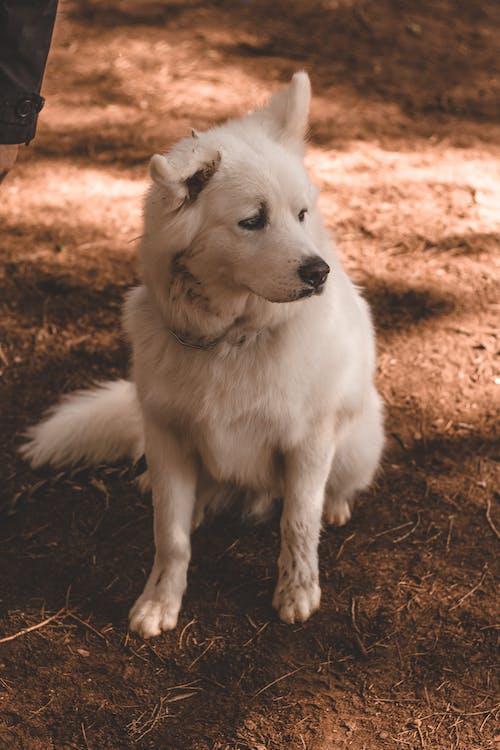 Free stock photo of animal, arctic, background