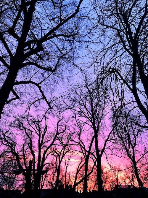 Foto profissional grátis de árvores, brilho, céu azul, céu limpo