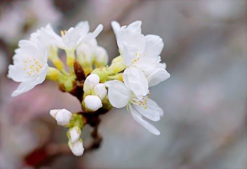 bitki örtüsü, bulanık arka plan, bulanıklık, büyüme içeren Ücretsiz stok fotoğraf