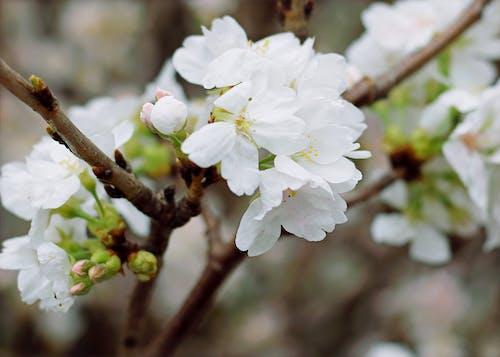 Gratis arkivbilde med anlegg, blomster, blomsterblad, blomstre