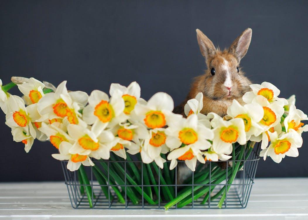 Free stock photo of animal, backdrop, background
