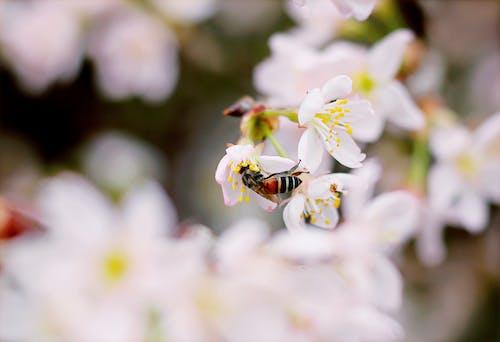 Bahçe, bitki örtüsü, böcek, bulanık arka plan içeren Ücretsiz stok fotoğraf
