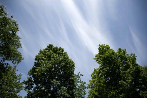 Foto profissional grátis de árvores, céu, natureza, nuvens
