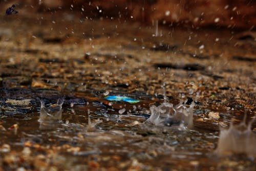 Free stock photo of طبيعة, أحمد الجربان, أمطار, فراشة