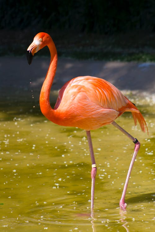 Foto stok gratis binatang, flamingo, kebun binatang