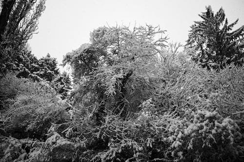 Photos gratuites de arbres, bois, branches, chute de neige