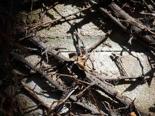 枯叶, 死去的植物, 死藤 的 免费素材图片