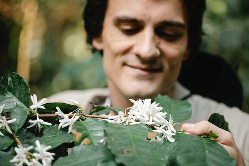 Crop farmer against blooming Arabian coffee plant in countryside