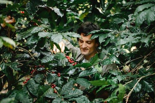 가지, 경작하다, 곡괭이의 무료 스톡 사진