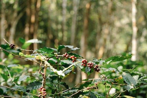 açık hava, ağaç, arazi içeren Ücretsiz stok fotoğraf