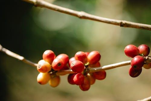 açık hava, ağaç, aromatik içeren Ücretsiz stok fotoğraf