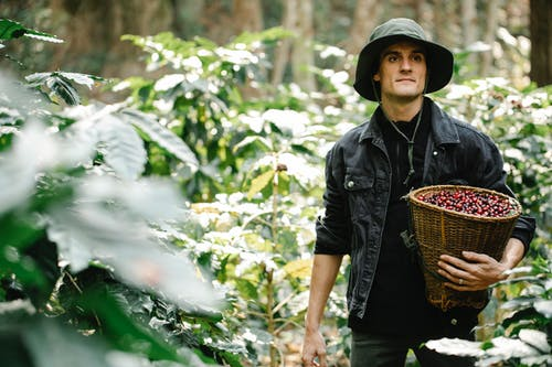 Young male gardener carrying basket with collected berries