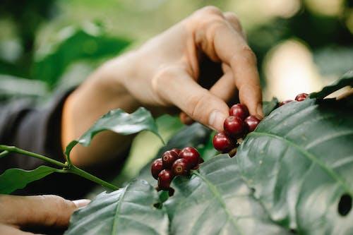 Fotos de stock gratuitas de agricultor, agricultura, al aire libre