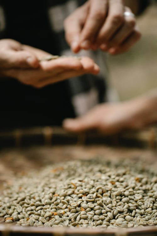 Crop harvesters separating dry coffee beans from chaff