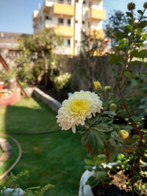 Free stock photo of Home Yard Garden
