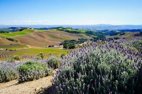 Darmowe zdjęcie z galerii z czyste niebo, degustacja wina, fioletowy