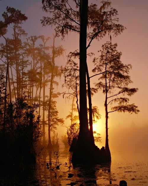 คลังภาพถ่ายฟรี ของ ต้นไม้, ตะวันลับฟ้า, ที่ลุ่มน้ำขัง, น้ำ