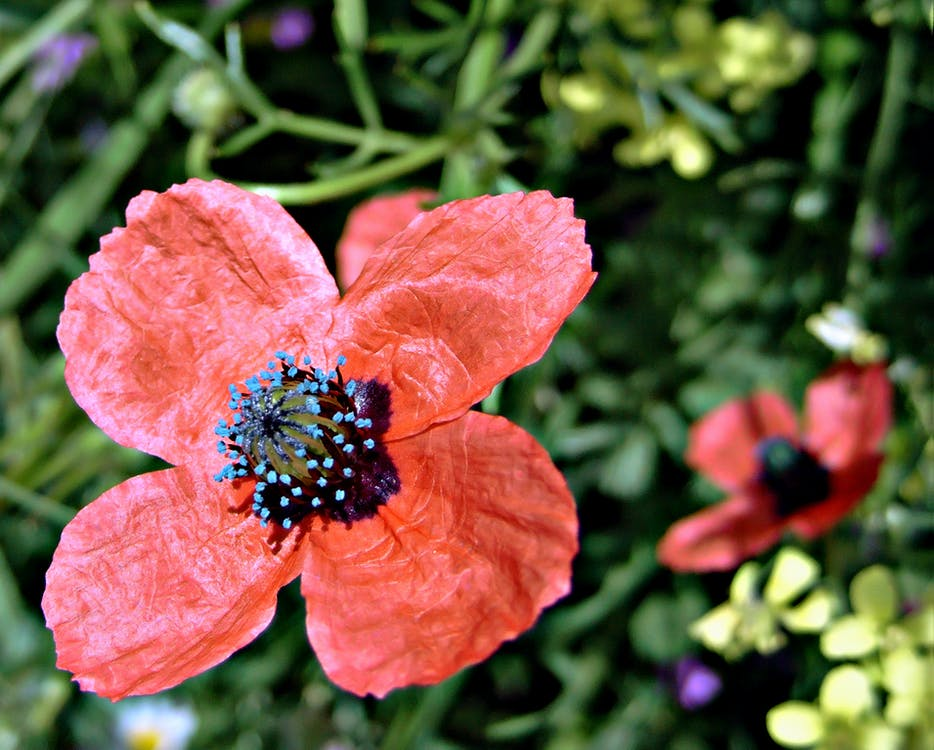 fiore, impianto, natura
