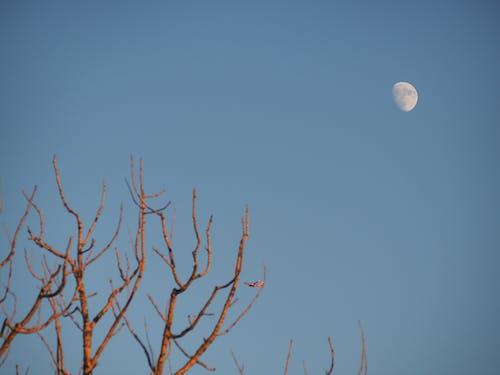 คลังภาพถ่ายฟรี ของ จันทรา, ตะวันลับฟ้า, ท้องฟ้า, ธรรมชาติ