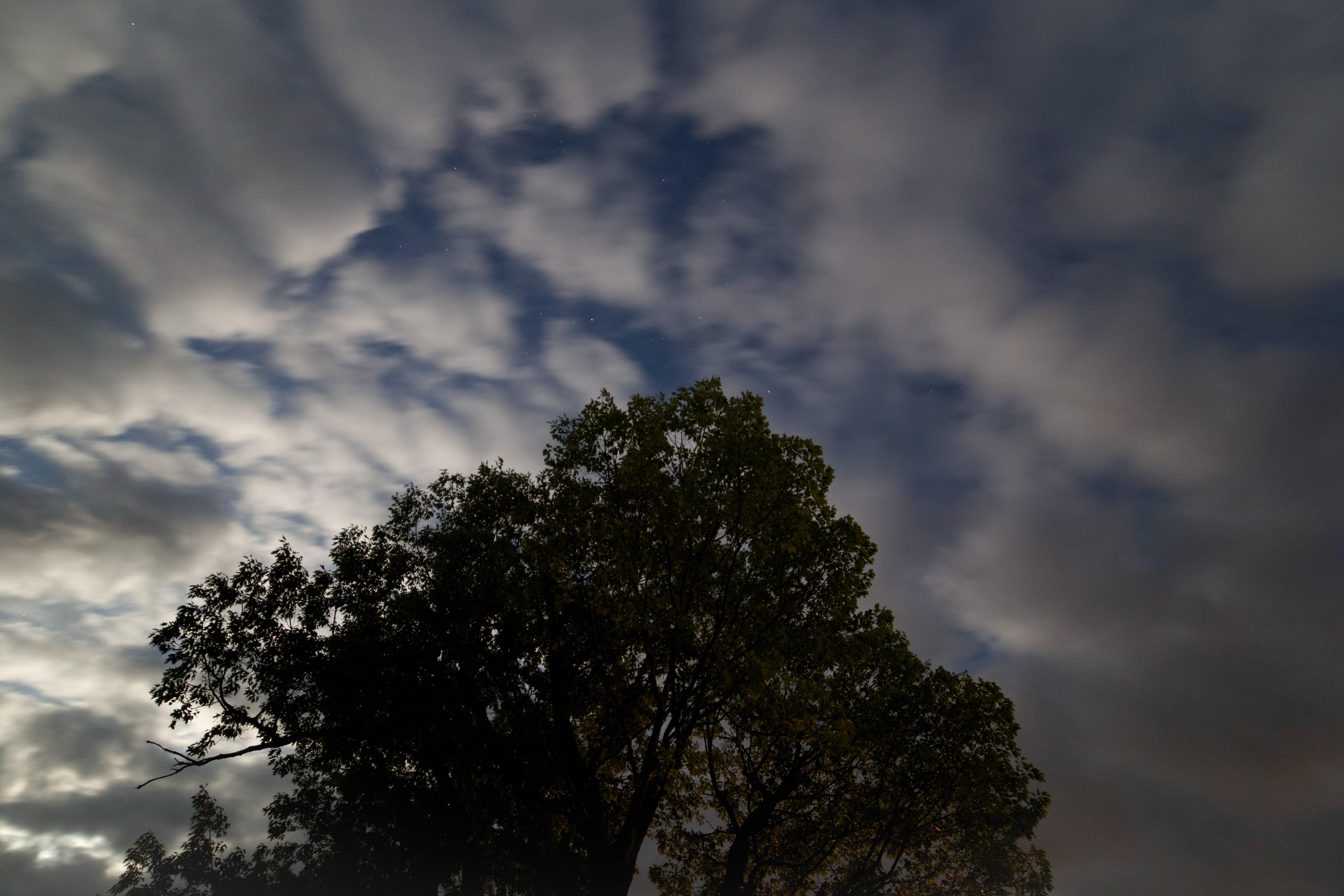 clouds, night, tree