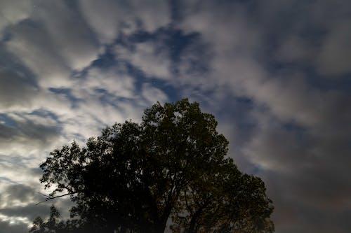 Fotobanka sbezplatnými fotkami na tému mraky, noc, oblaky, strom