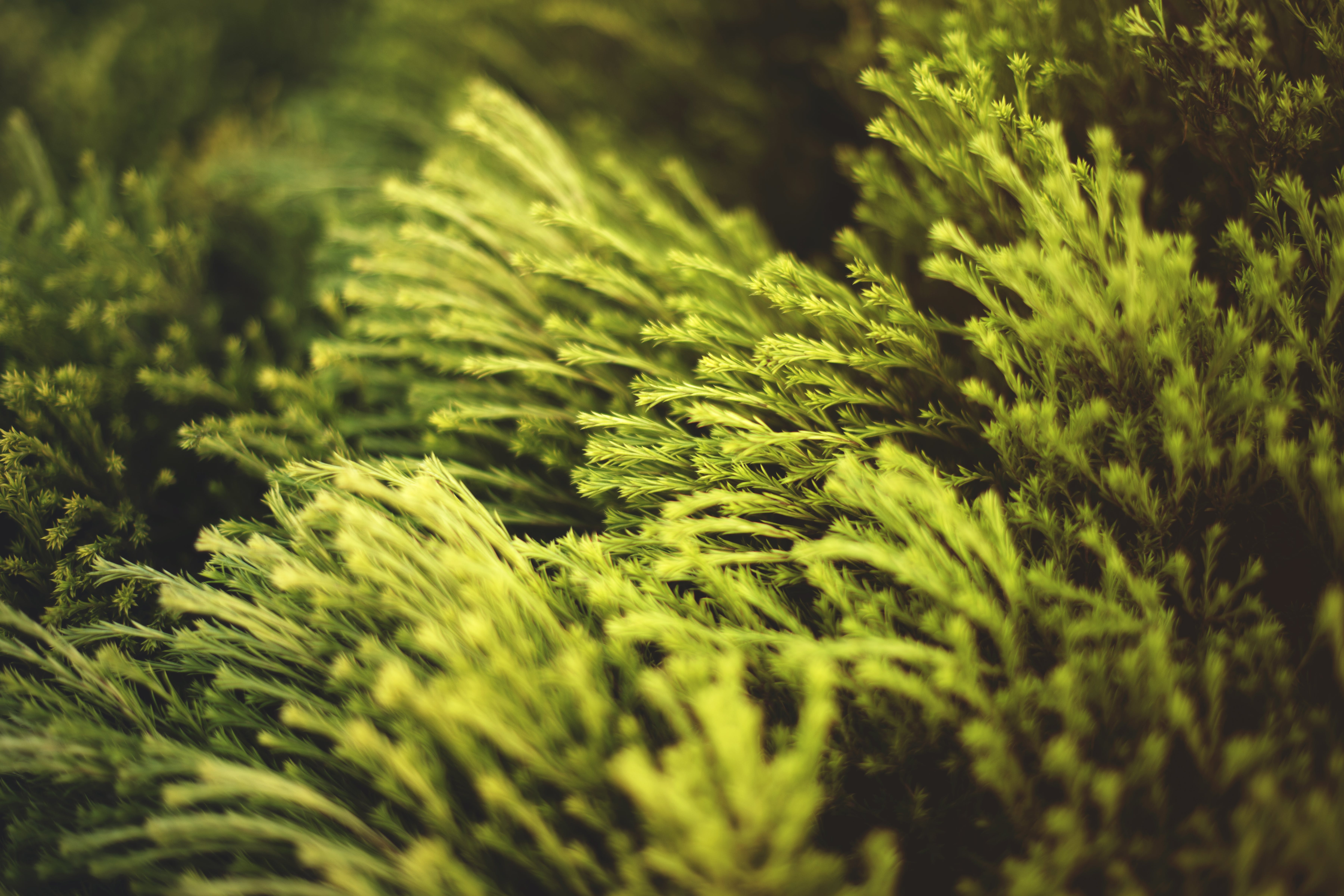 增長, 天性, 常綠, 模糊 的 免費圖庫相片