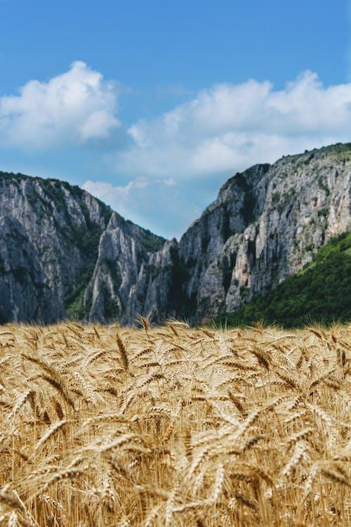 Brown Grass Near Gray Mountain Under White Clouds