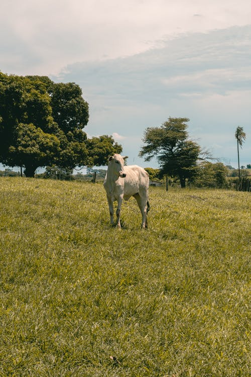 White Horse on Green Grass Field