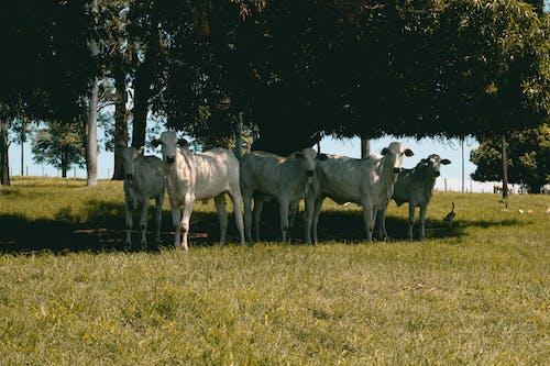 Foto profissional grátis de agricultura, animal, área