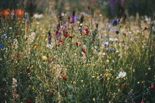1000 interesting wild flowers photos pexels free stock photos blue white and red poppy flower field mightylinksfo