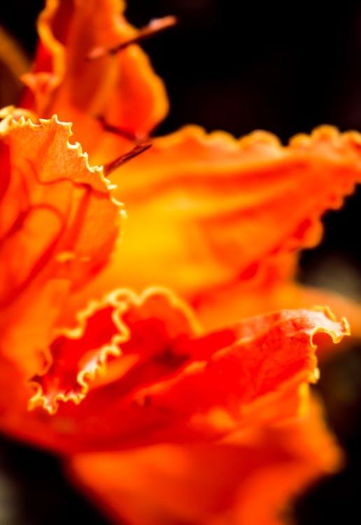 jarní květiny, krásné květiny, květina tapeta