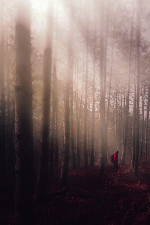 Immagine gratuita di alba, albero, astratto
