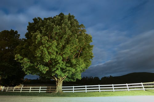 Green Leafed Tree Beside White Fence