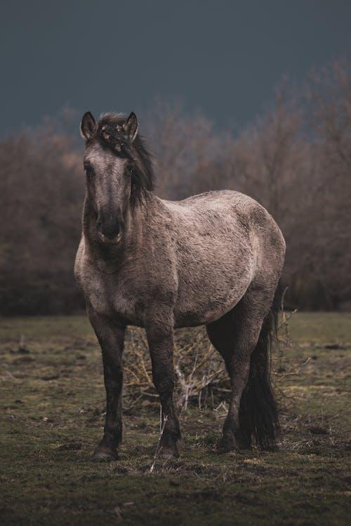 Brown Horse on Green Grass Field