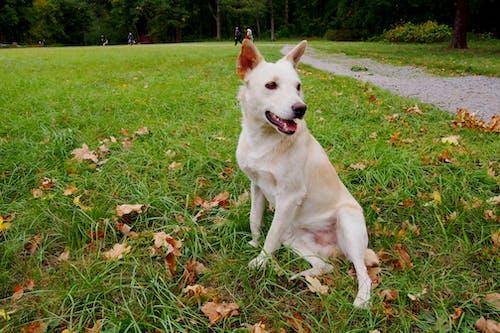 Photos gratuites de animal de compagnie, chien, chiens, herbe