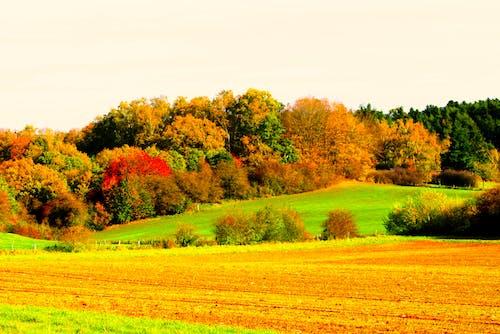 Gratis lagerfoto af efterårsfarver