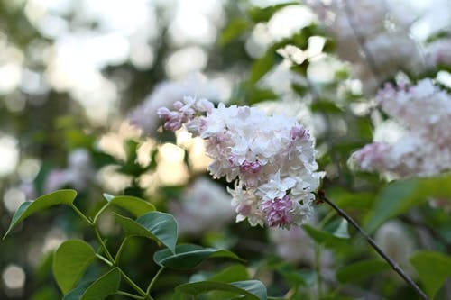 Selective Focus Photography of White and Pink Petaled Flowers