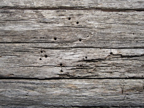 Free stock photo of wood, texture, trees, wood planks