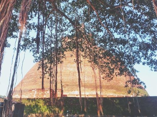 佛教, 佛教徒, 祗陀林佛塔, 美麗的樹 的 免費圖庫相片
