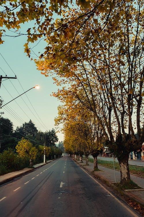 가로등, 가을, 거리의 무료 스톡 사진